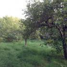 Ogród społecznościowy – Fort Bema