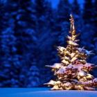 Jaką choinkę wybrać na Boże Narodzenie?